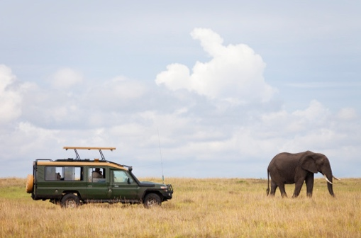 _0002_square_elephant-and-woman.png