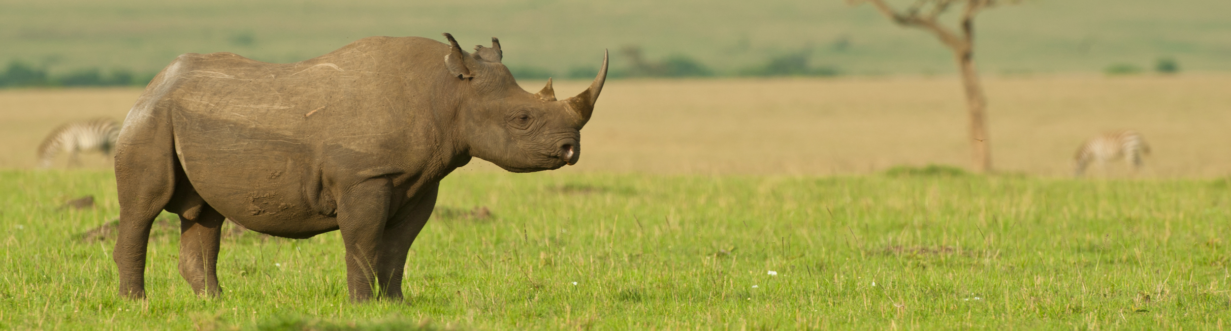 _0007_rhino.png