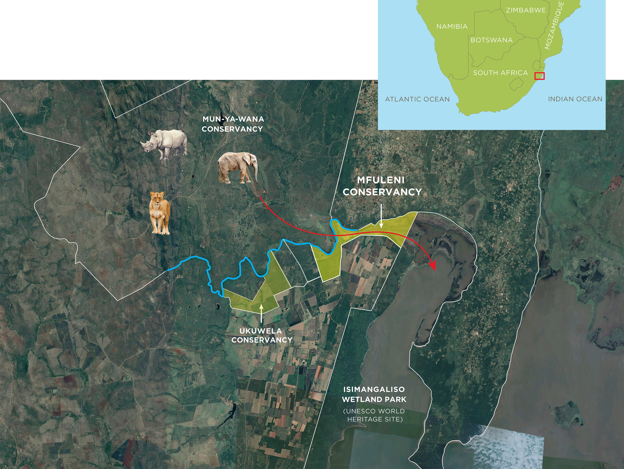 WITH THE PROTECTION OF MFULENI THERE IS NOW THE POTENTIAL TO CREATE A WILDLIFE CORRIDOR BETWEEN THE MUN-YA-WANA CONSERVANCY AND ISIMANGALISO WETLAND PARK