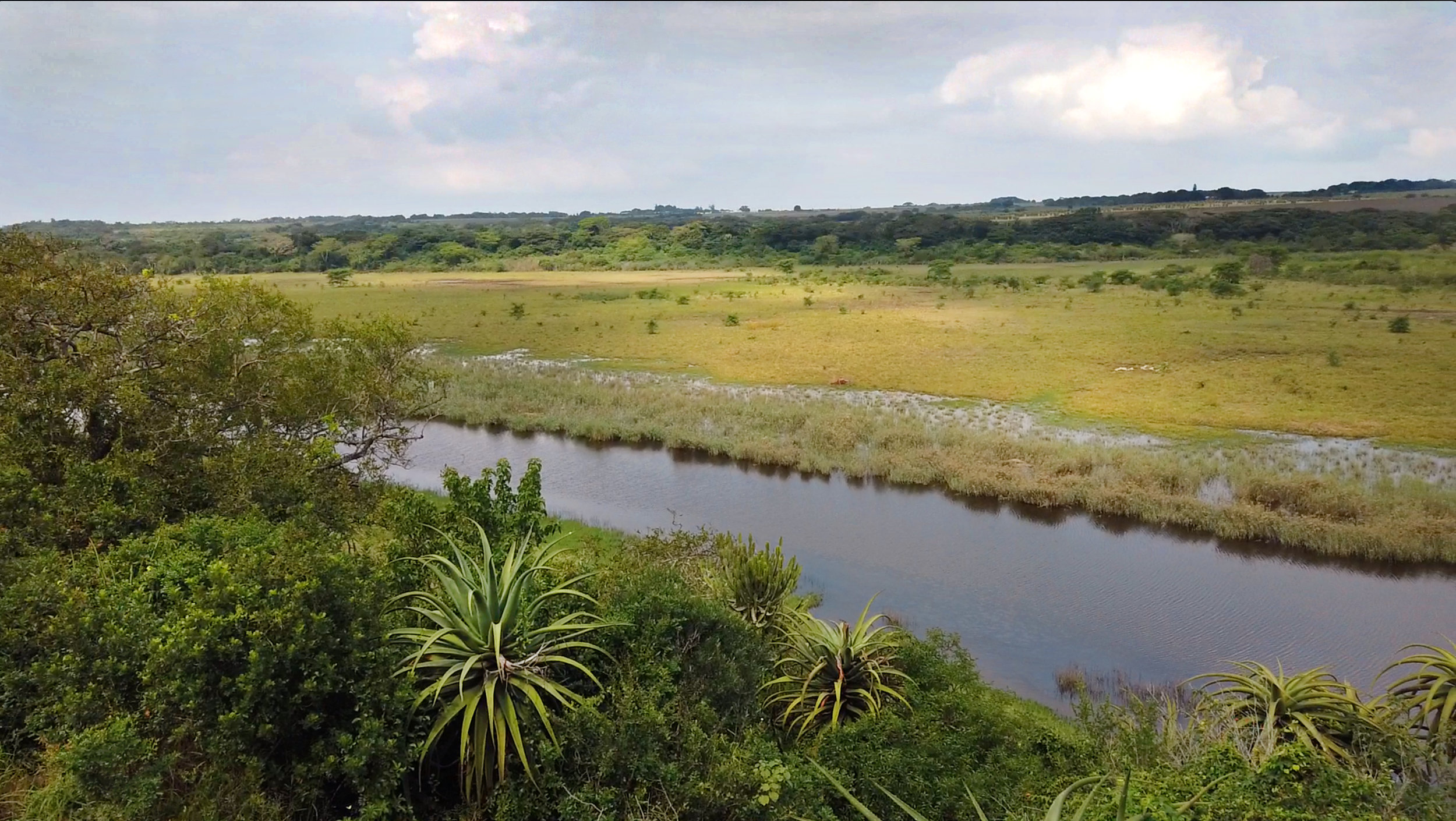 THE MANY VEGETATION TYPES AND ACCESS TO WATER MAKE MFULENI A PERFECT HABITAT FOR WILDLIFE