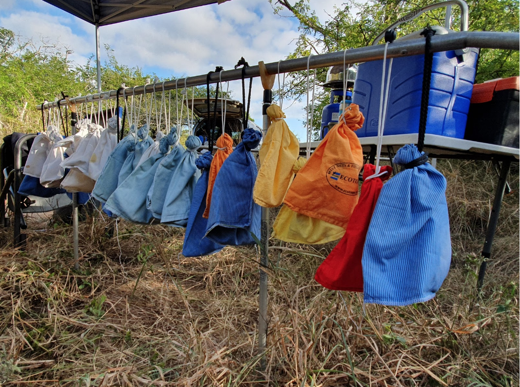 A clutch of 28 birds sit waiting in their capture bags to be processed and ringed. Their time in the bags and the temperature is monitored closely.