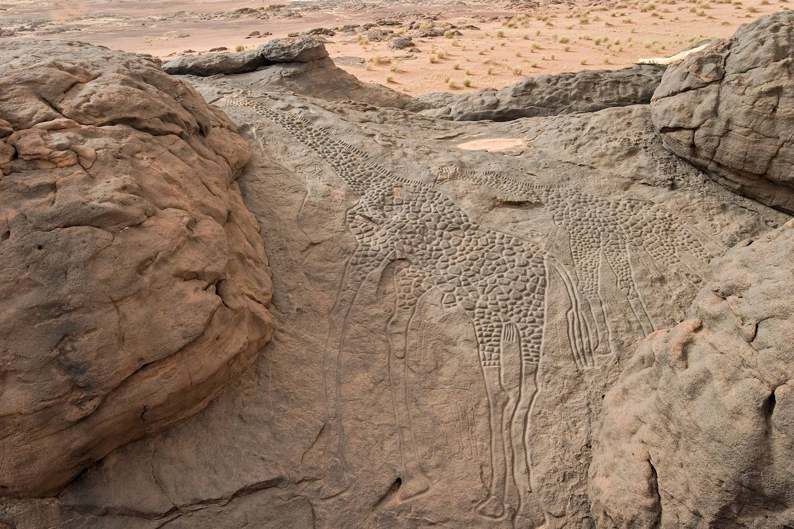 The Dabous Giraffes life-sized petroglyphs in the Ténéré Desert,Niger dating back to the New Stone Age at least 8000 years ago. Source: http:// i.imgur.com/LNaAwbN.jpg