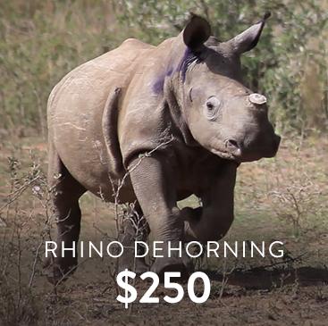 _0003_rhino-dehorning.png