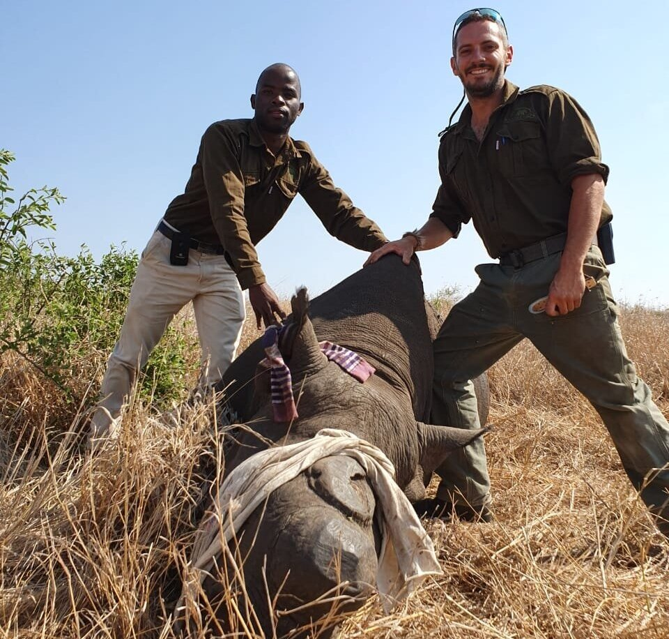Sizwe and Axel work for Wild Tomorrow Fund in the field, working side by side at a rhino dehorning.