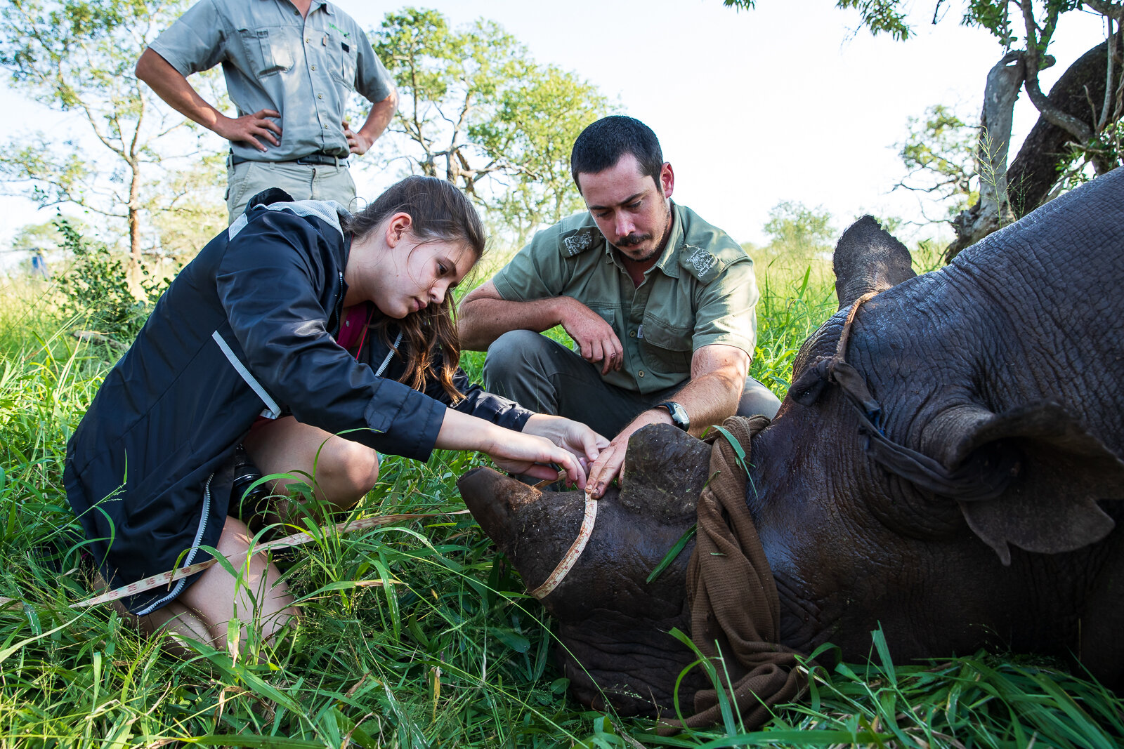 Volunteer Izzy Nesci works with a park ranger to measure a rhino horn before a dehorning procedure. Photo Credit: Charles Chessler