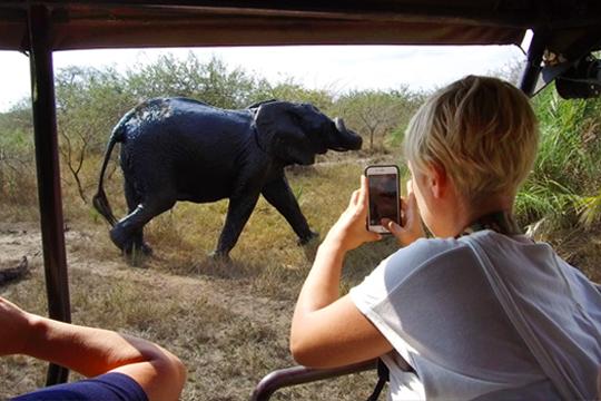 _0001_elephant-safari.png