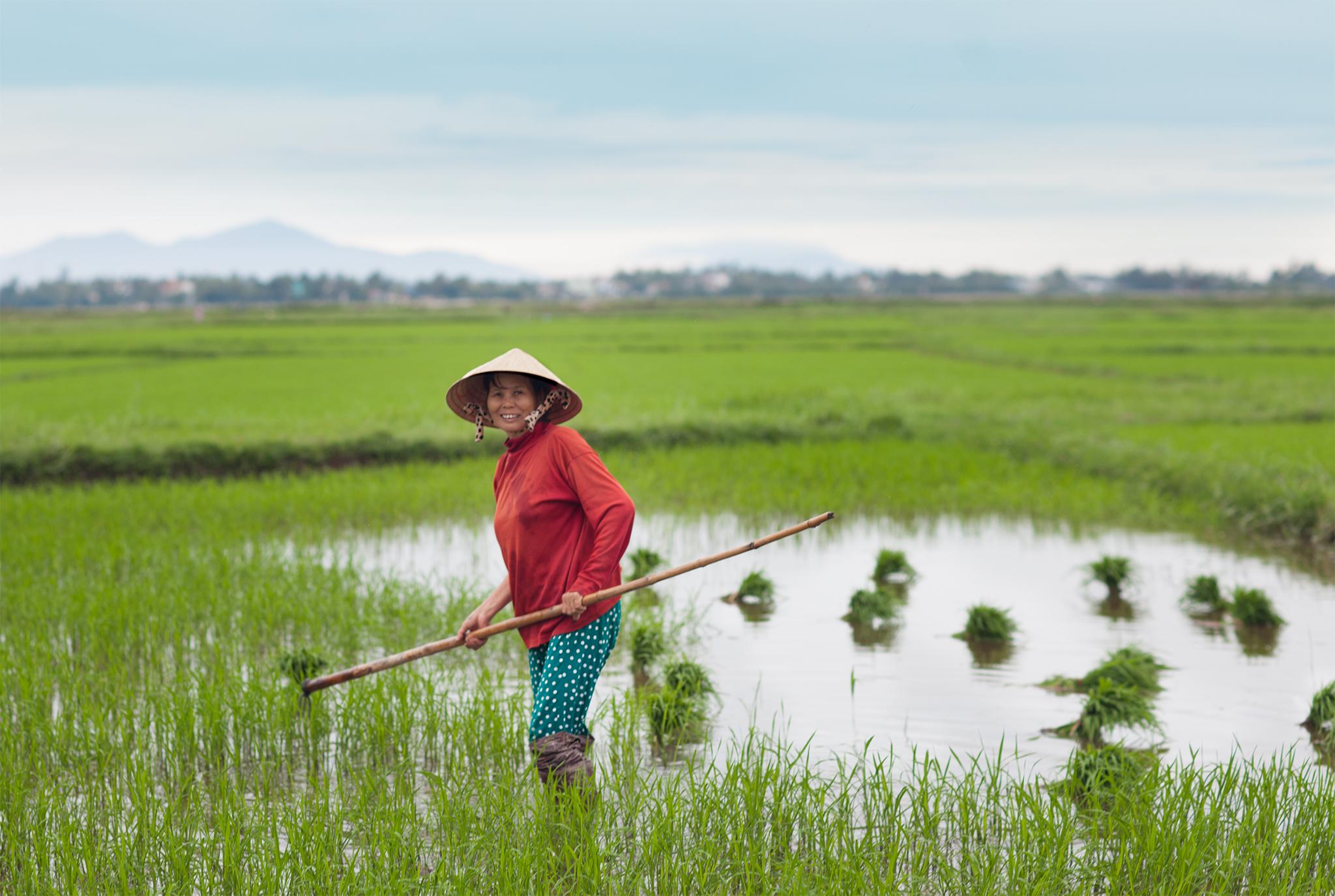 qfb+-+Hoi+An3-+Vietnam+-93LR.jpg