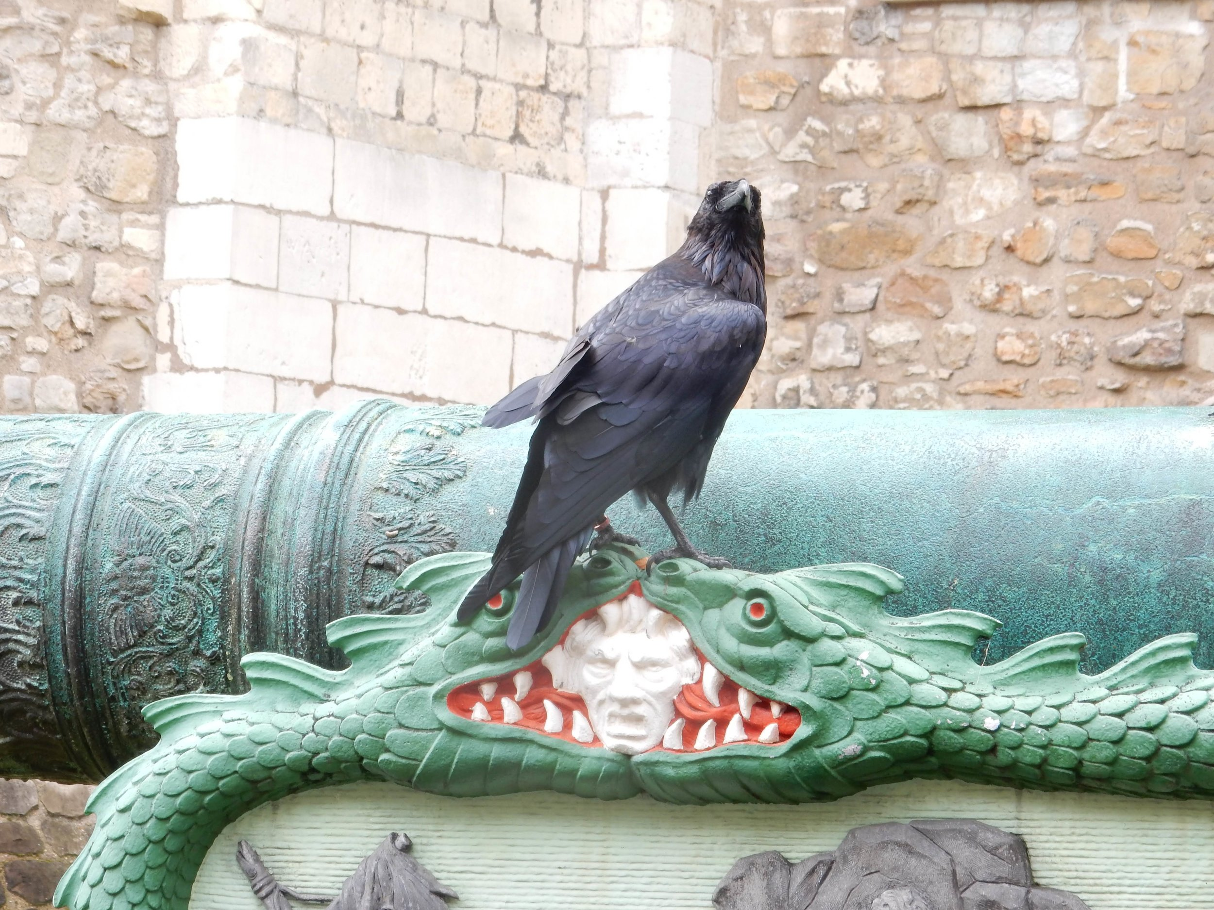 One of the six ravens.