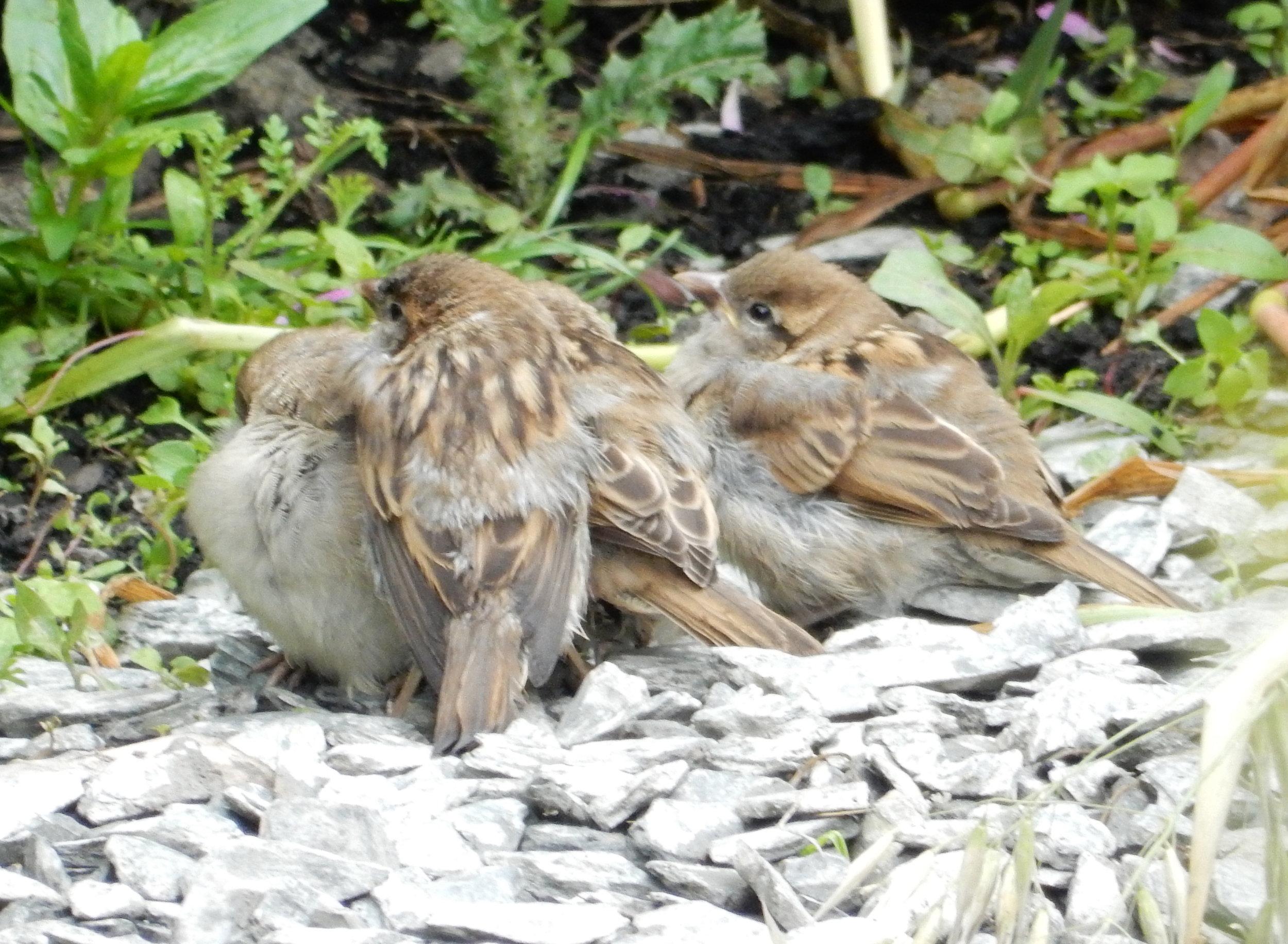 sparrows-hw.jpg