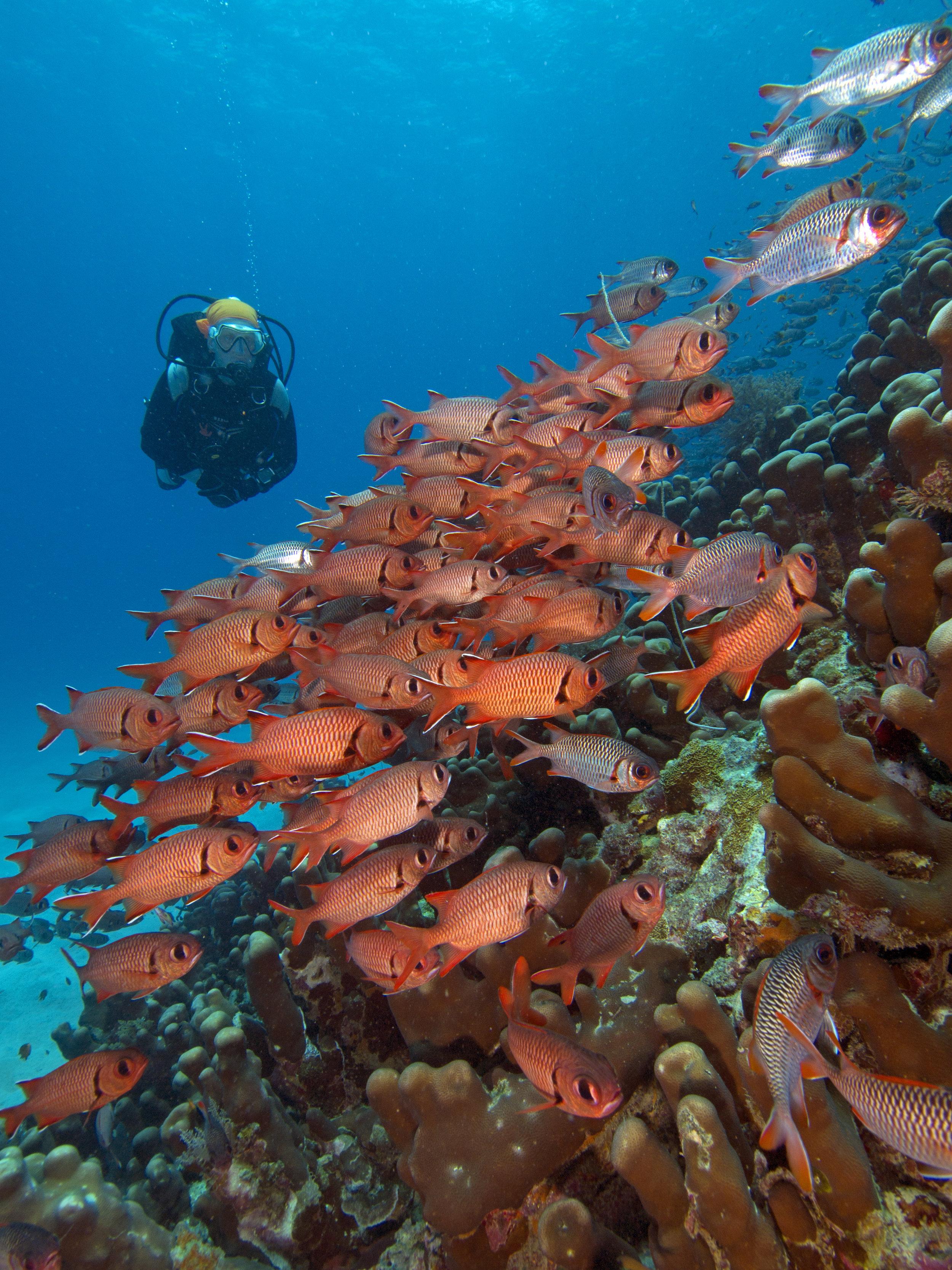 diving in chole bay (1).jpg