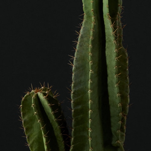 texture-cactus.jpg