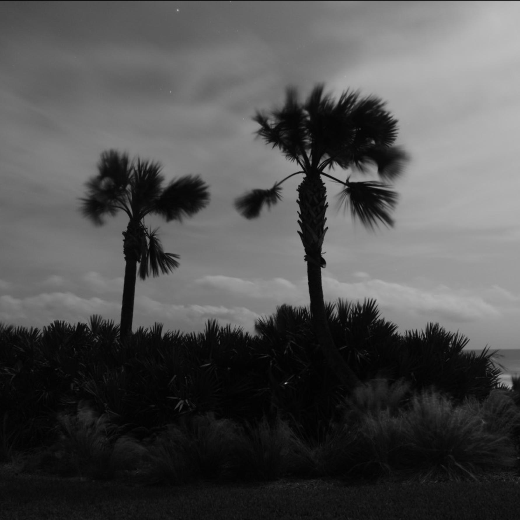 Breezy palms 3