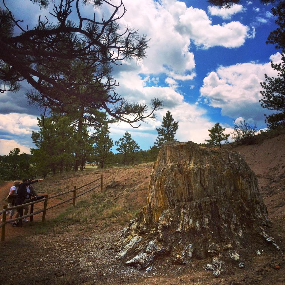 Florissant Fossil Beds, petrified redwood, credit Kirsten Akens 2015