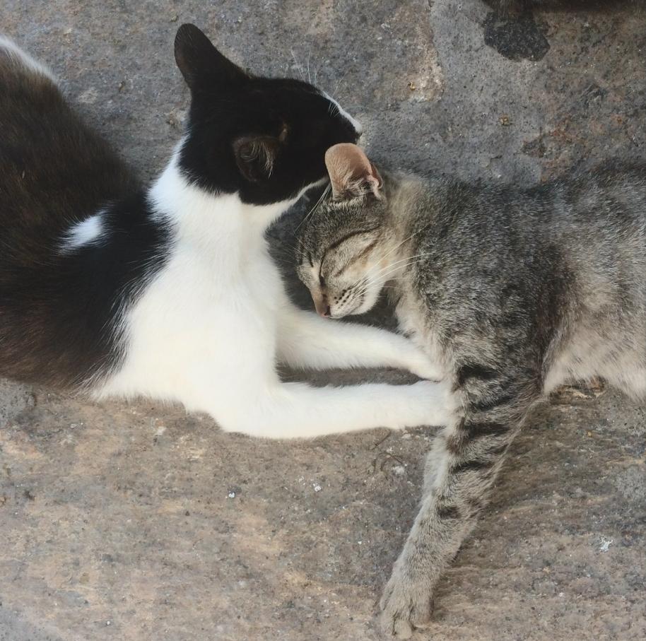 Cats in Greece, credit Kirsten Akens 2016