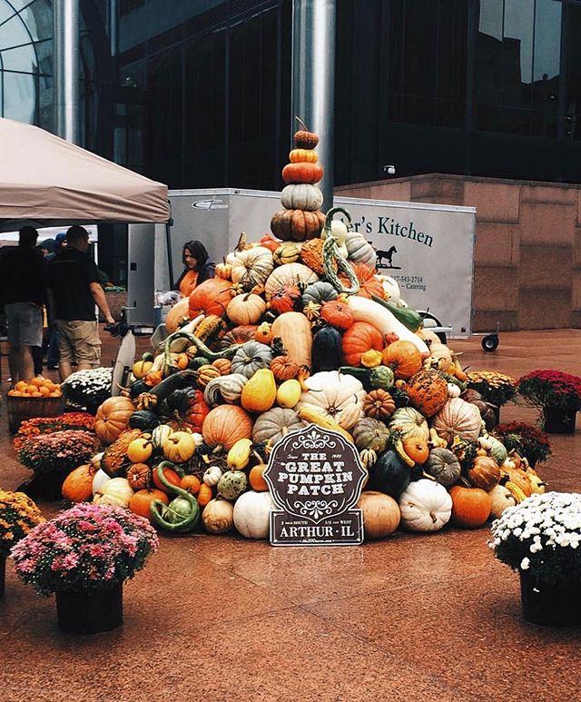 it's decorative gourd season 🎃