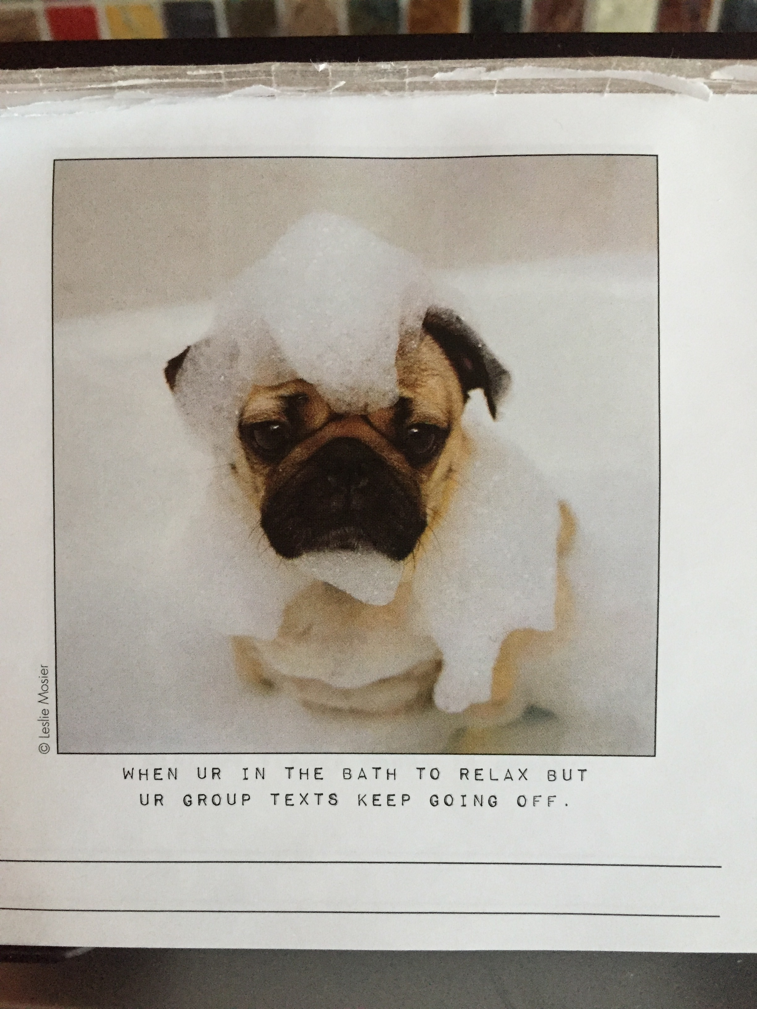 Last, but certainly not least....I bring you, the  Doug The Pug daily calendar . I put this in my husband's stocking at Christmas since he's obsessed with pugs (he's never getting one in real life, no matter how much he begs) and specifically loooves  Doug The Pug on Instagram . I really intended for him to take it to work, but he put it in the kitchen atop the microwave, and I admit that I am often the first one to flip the page and see what Doug is up to. Always, always, always makes me smile.
