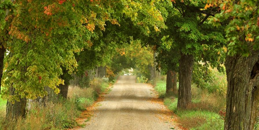 Walking & Grand Trunk Trails