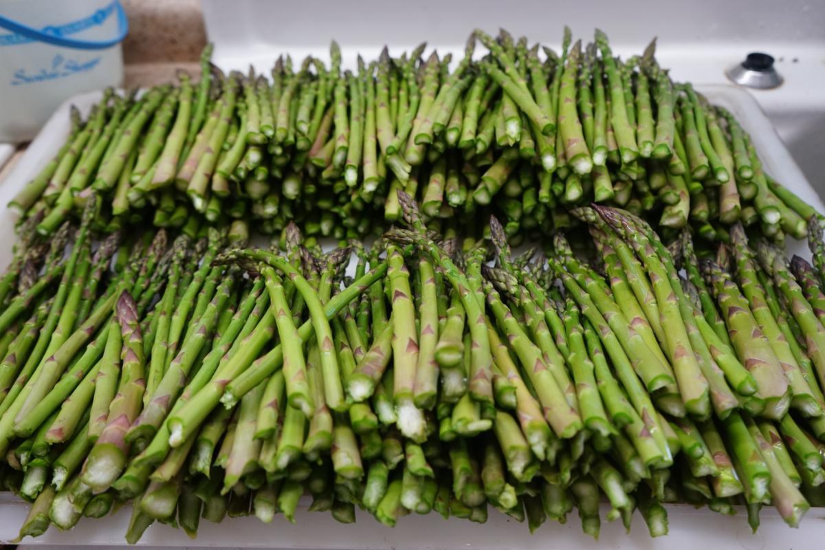 Asparagus in Iowa-01576.jpg