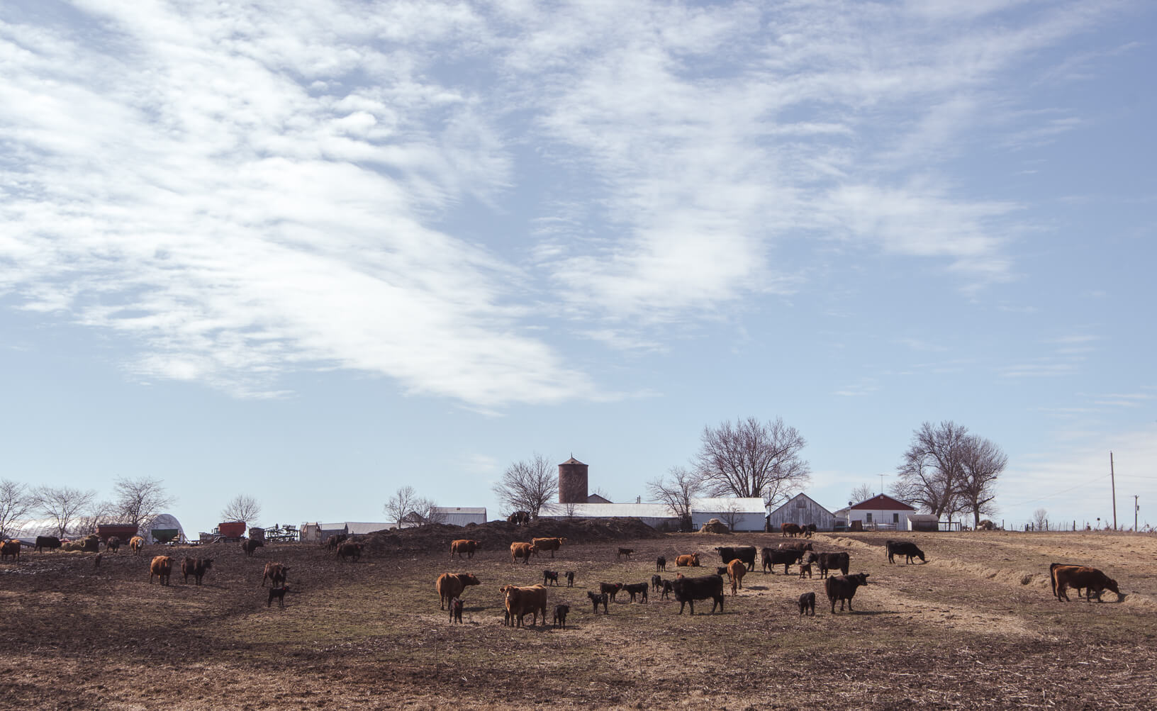 Photo credit Joseph L. Murphy. The rolling hills of Bryan Reed's farm near Albia provided a serene backdrop as cows and calves bask in the spring sun.