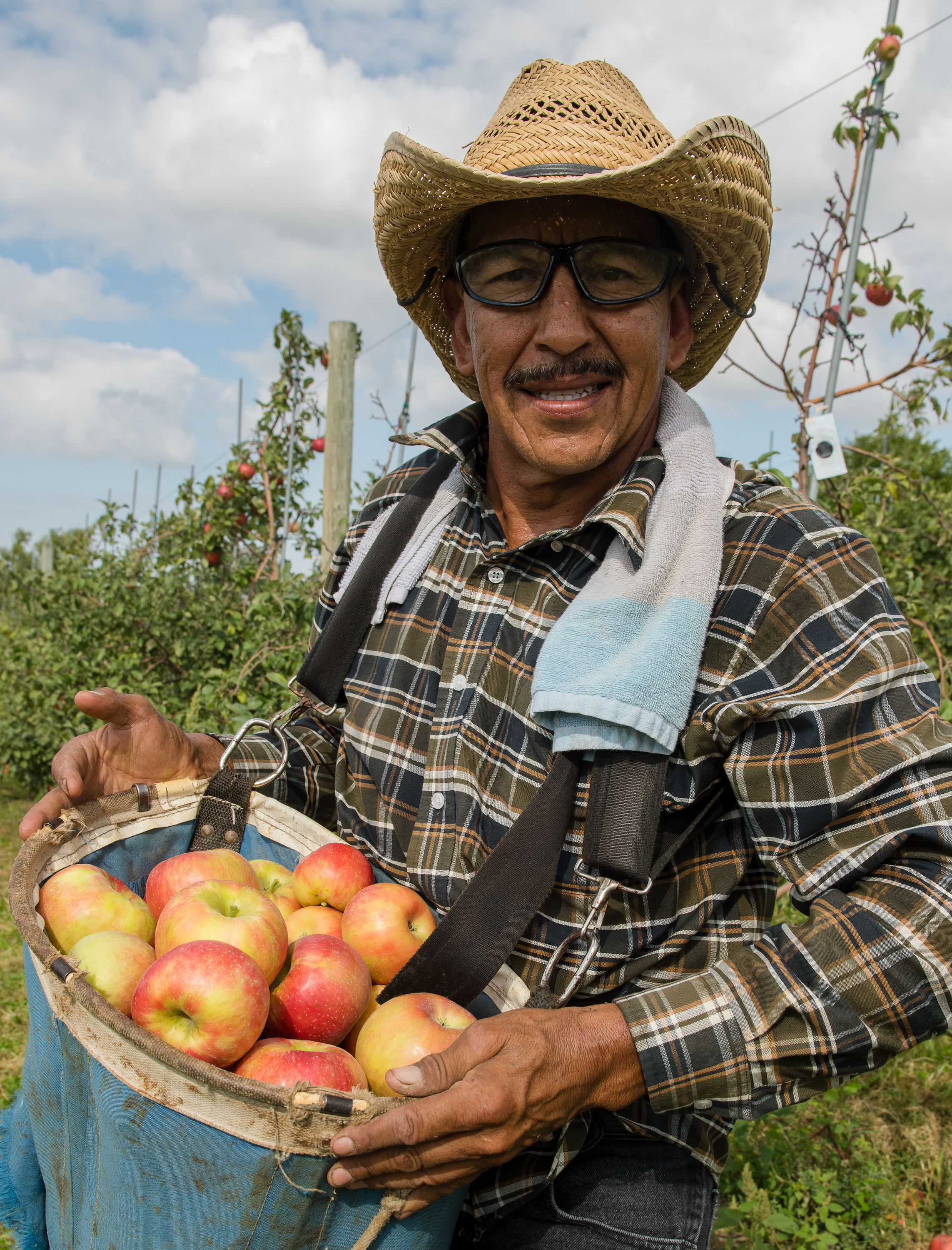 All apples are picked by hand by one employee. Photo credit: Joseph L. Murphy/Iowa Soybean Association