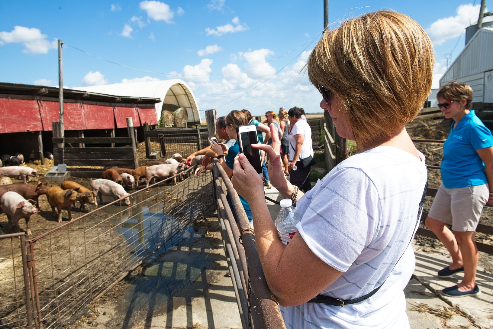 Some of Dave Struthers' pigs are raised outdoors, some are raised in buildings. Photo credit: Joseph L. Murphy/Iowa Soybean Association