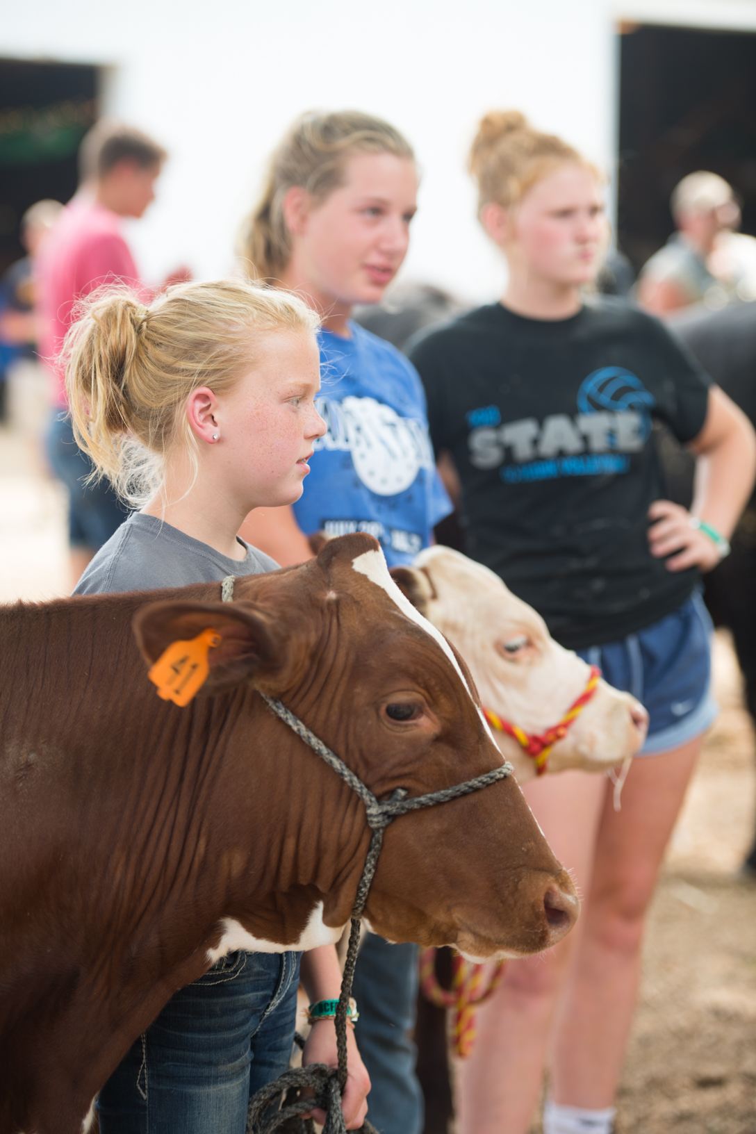 Macy Tiedt, Karissa Oldenburger and Cari Schroeder hold their cattle while waiting for a show at the Bremer County Fair in Waverly. Photo credit: Joseph L. Murphy, Iowa Soybean Association