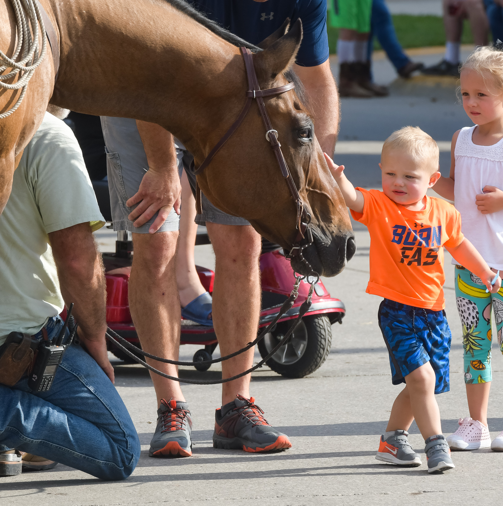 Caden Matthias of Fairbanks pets the nose of Mike Wimer's horse at the Iowa State Fair. Photo credit: Joseph L. Murphy/Iowa Soybean Association