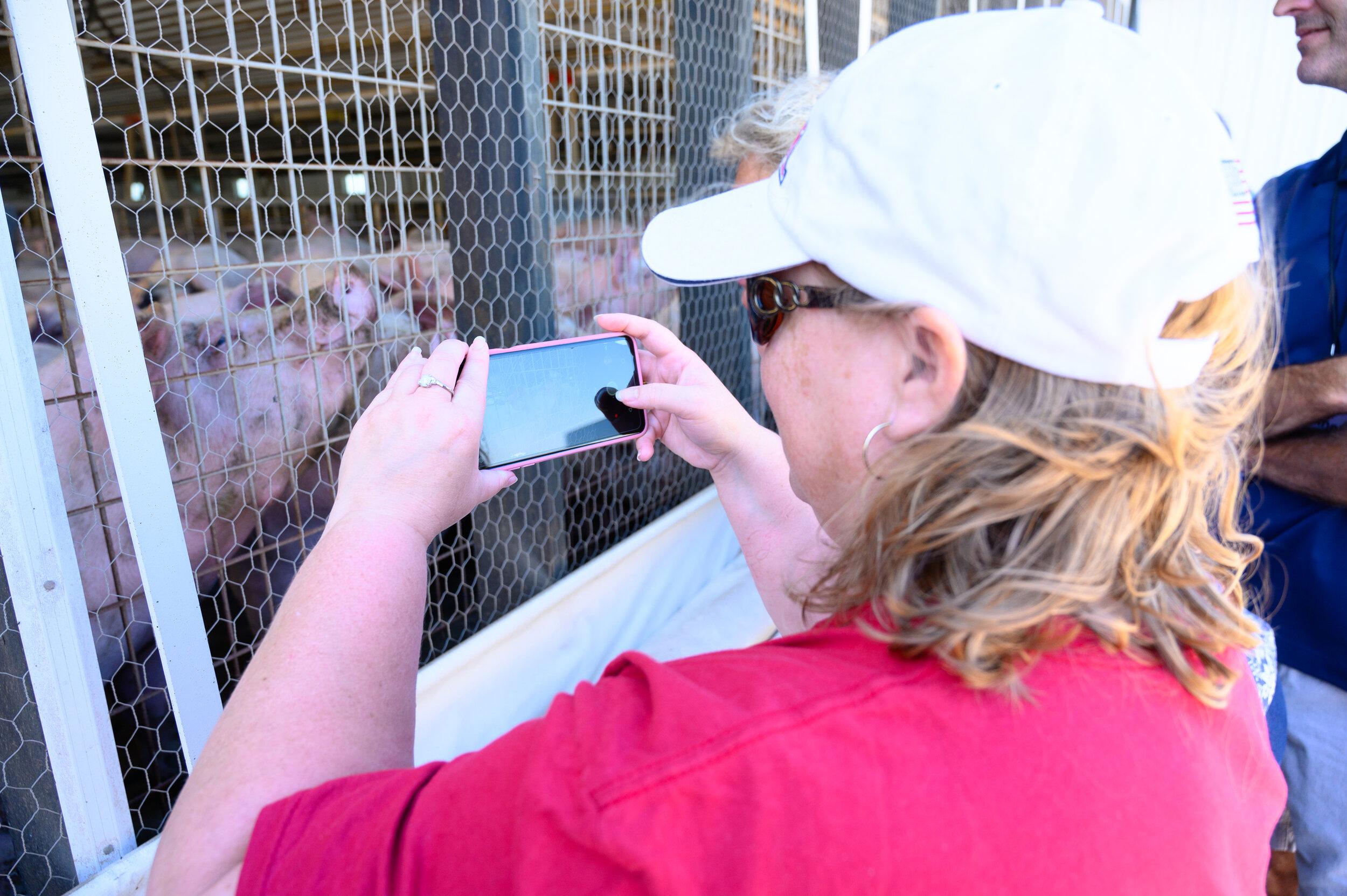Teresa Lane takes a photo of pigs at Jonathan Wetter's farm. Photo credit: Joseph L. Murphy/Iowa Soybean Association