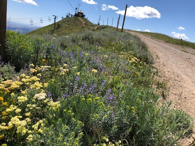 Photo at the top of Bald Mountain in Ketchum, Idaho. It always amazes me the flowers and plants that survive at higher altitude. Photo credit: Tom Oswald