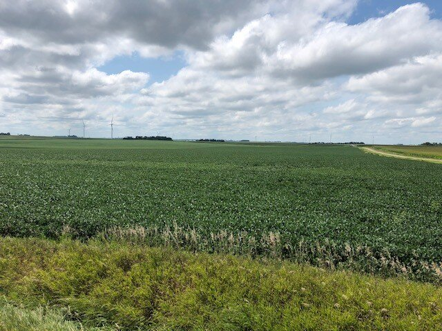 Photo of a healthy soybean field on August 18. Photo credit: Tom Oswald