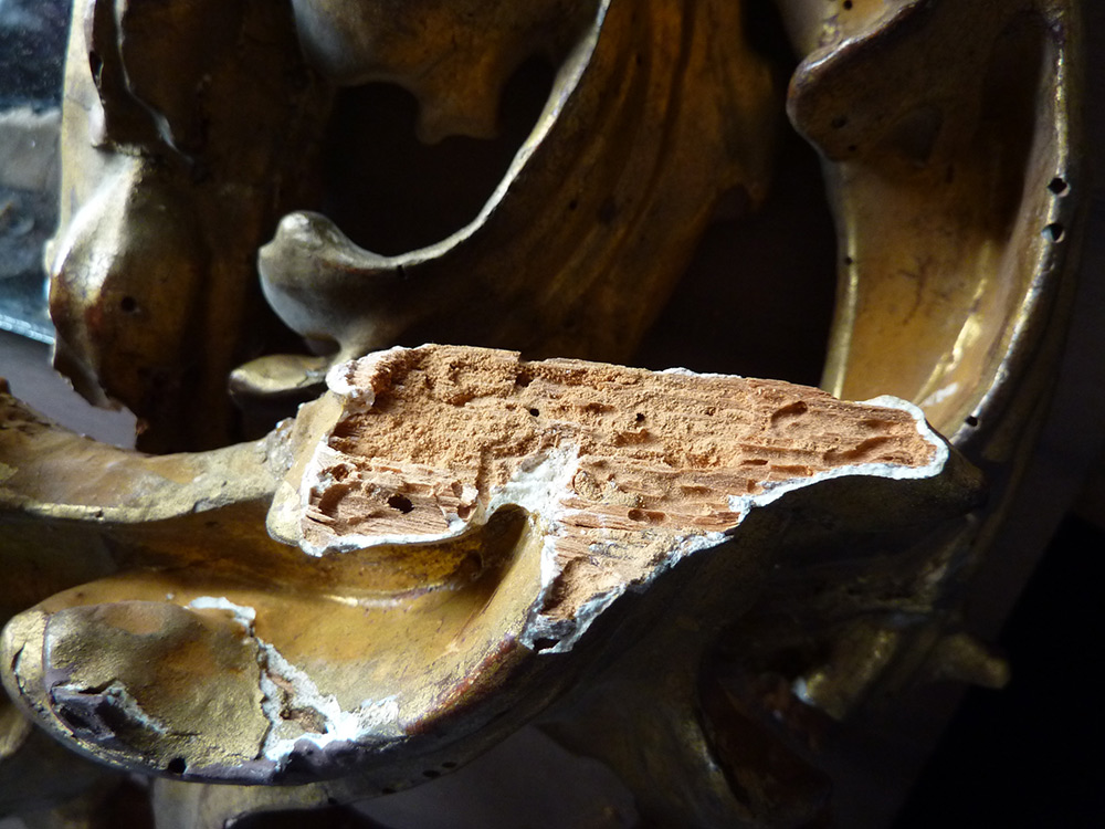 A detail of an ornate gilded frame where the wood substrate has been severely damaged by powderpost beetles, resulting in large voids, and weakness in the wood support.