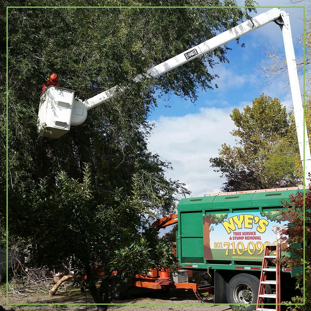 Hudson Tree Trimming