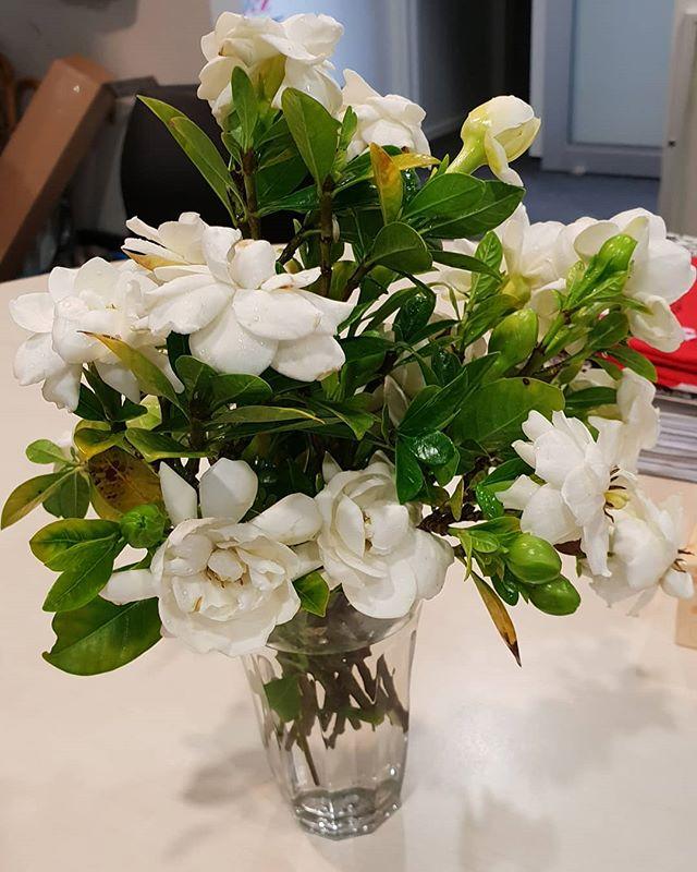 Thank you for the lovely flowers!  #aucklandmarket #aucklandmarkets #auckland #aucklandevents #WesleyMarket #puketapapalocalboard #puketapapa #mtroskill #sandringhamroad #sandringham