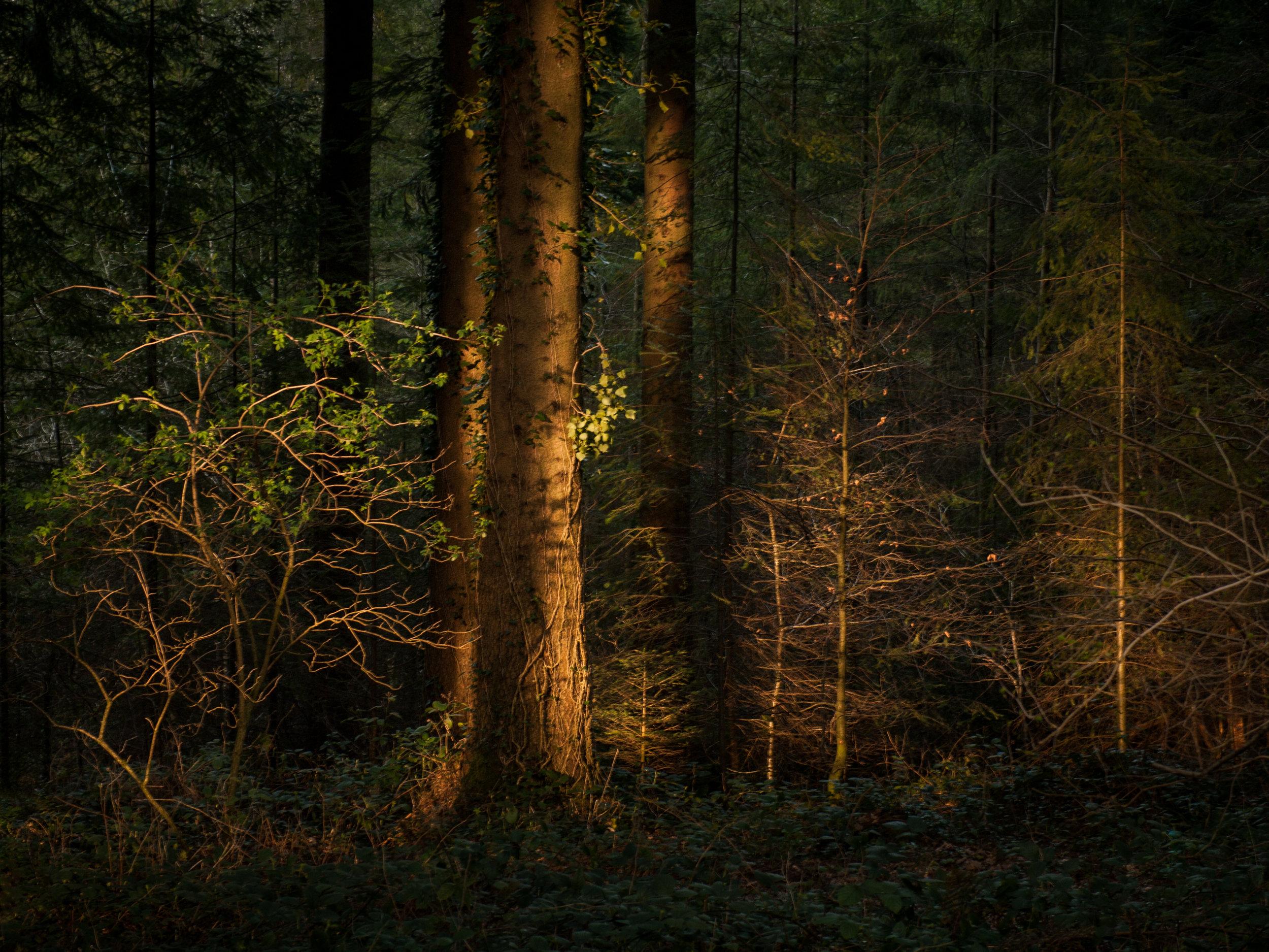 Leica Digilux 3, Leica 14mm to 50mm lens. Fedw wood, Chepstow.