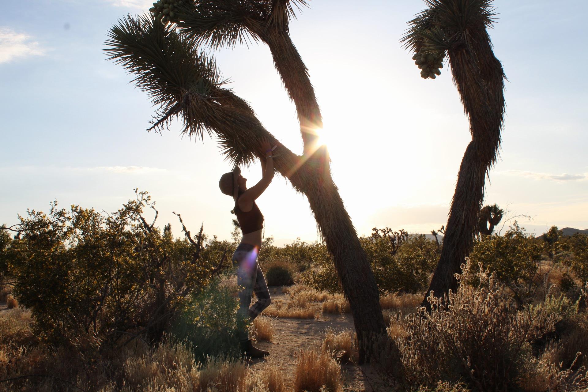 Joshua Tree ~ Finding Balance