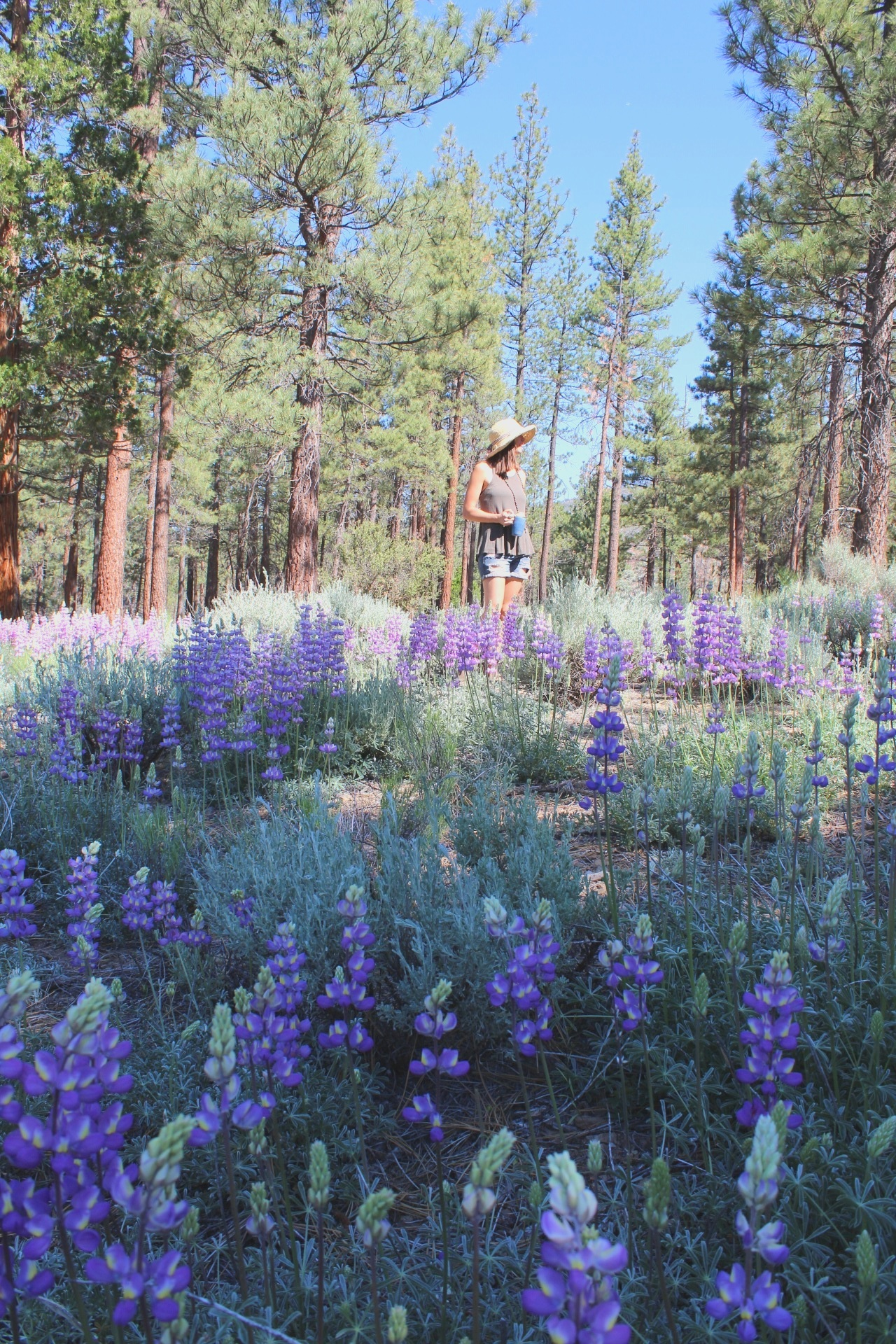 Wildflowers+of+California+~+Sea+of+Lupines++~+ALL+GOODS+FROM+THE+WOODS
