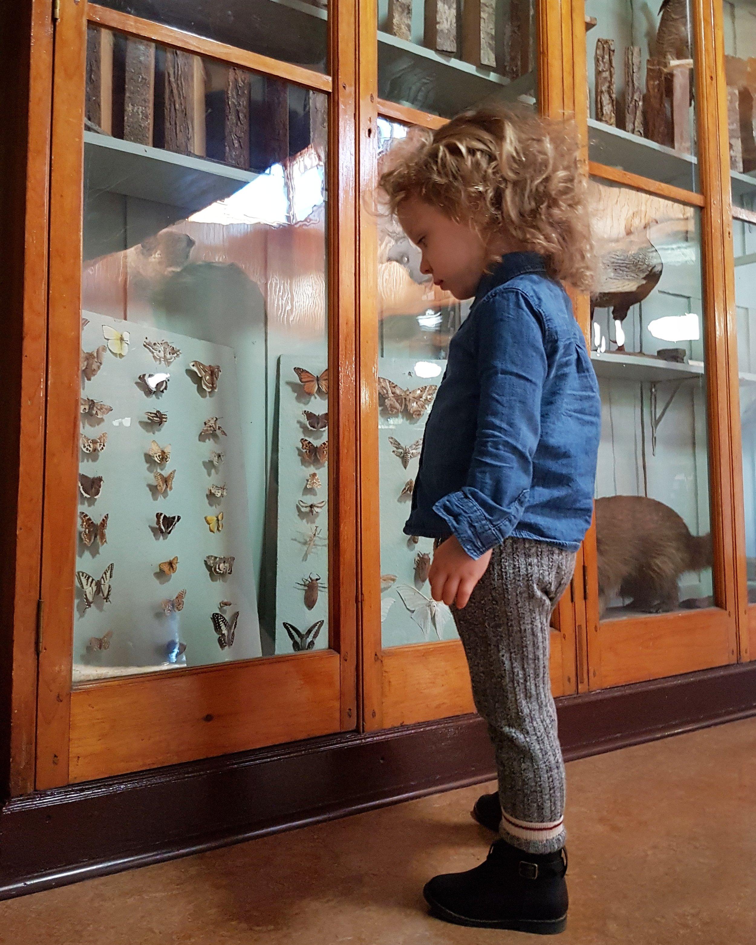 banff museum review 3.jpg