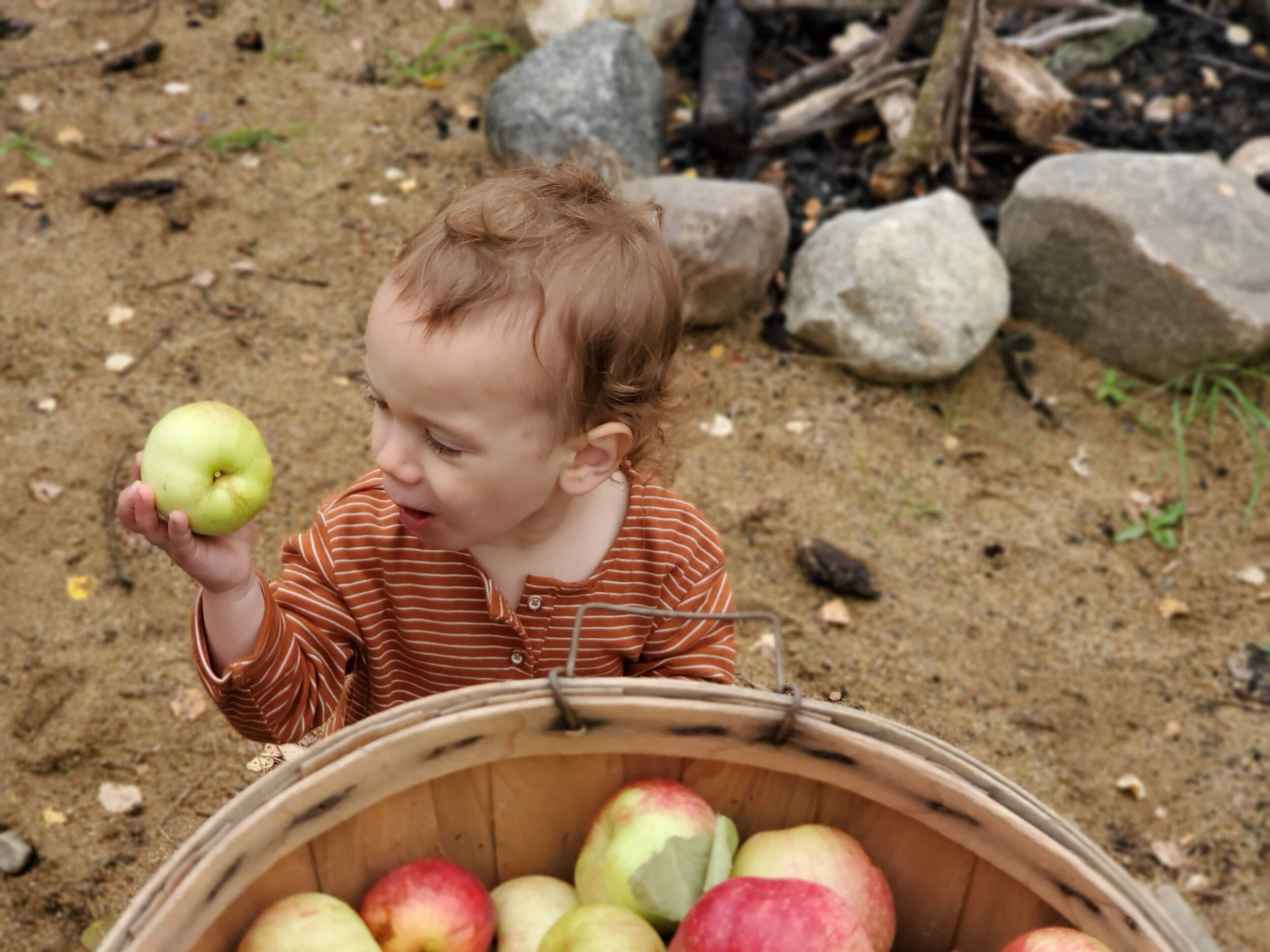 TimberNook's program is weekly, with changing themes. This week was Apples. It began with a story around the campfire about apples where the kids could enjoy their snack from home as well as some freshly picked apples.
