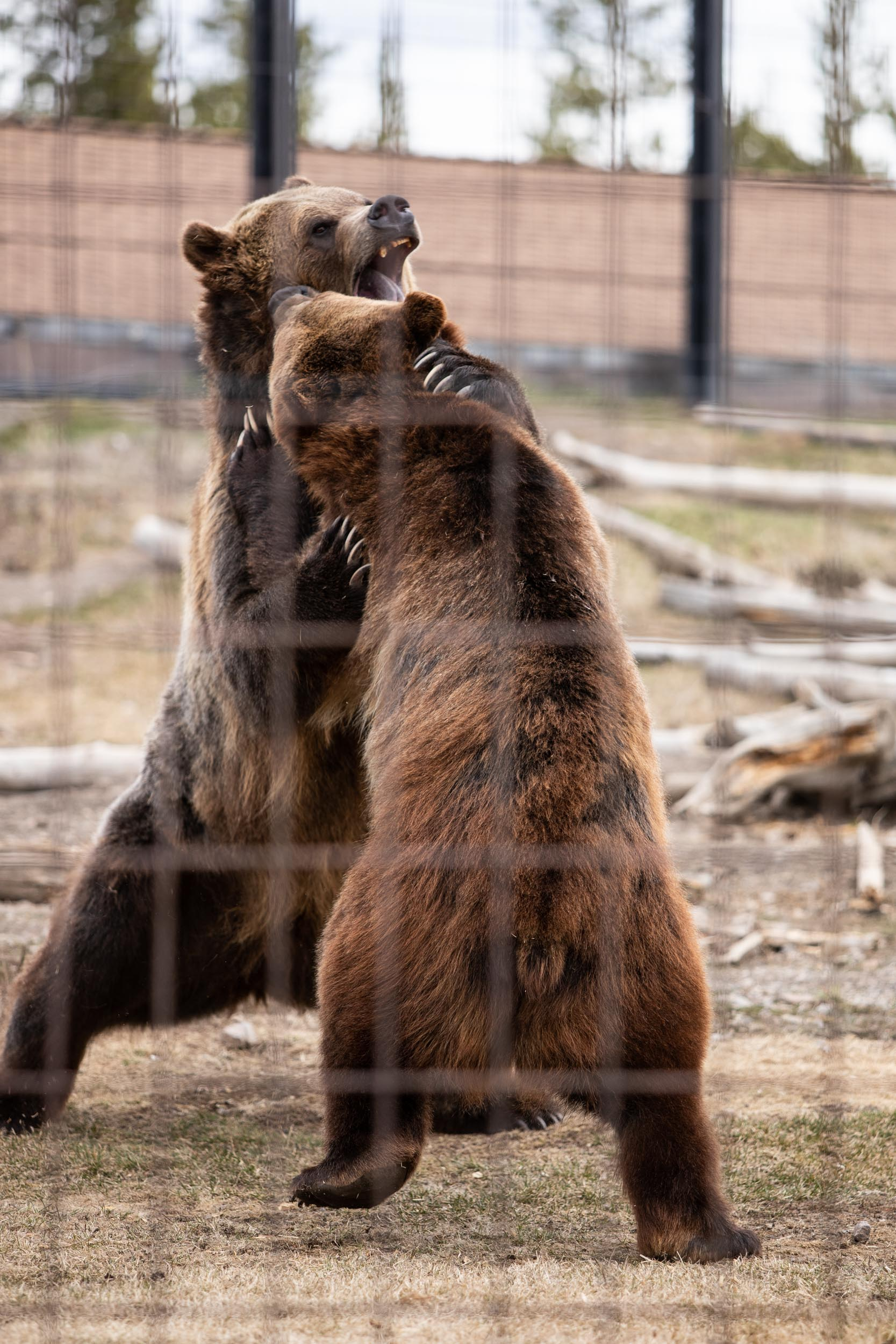 Grizzly & Wolf Discovery Center-10.jpg