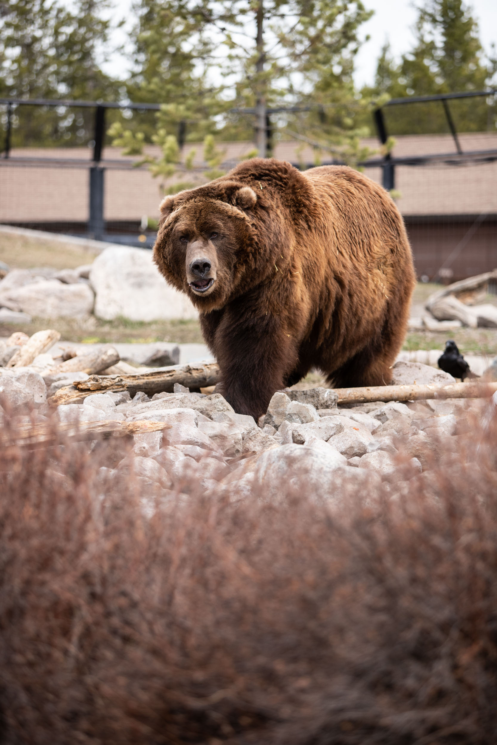 Grizzly & Wolf Discovery Center-20.jpg