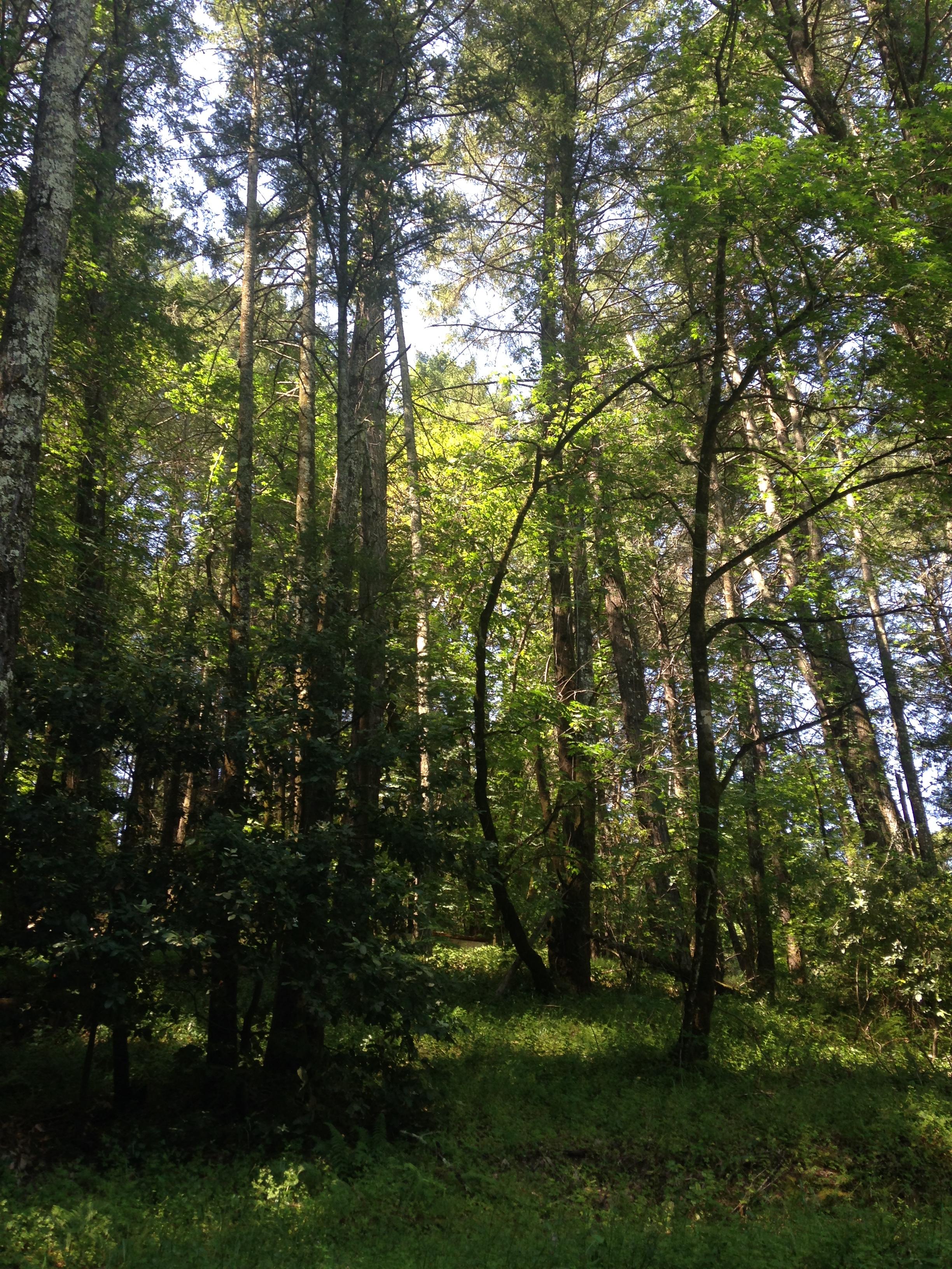 DF_forest.JPG