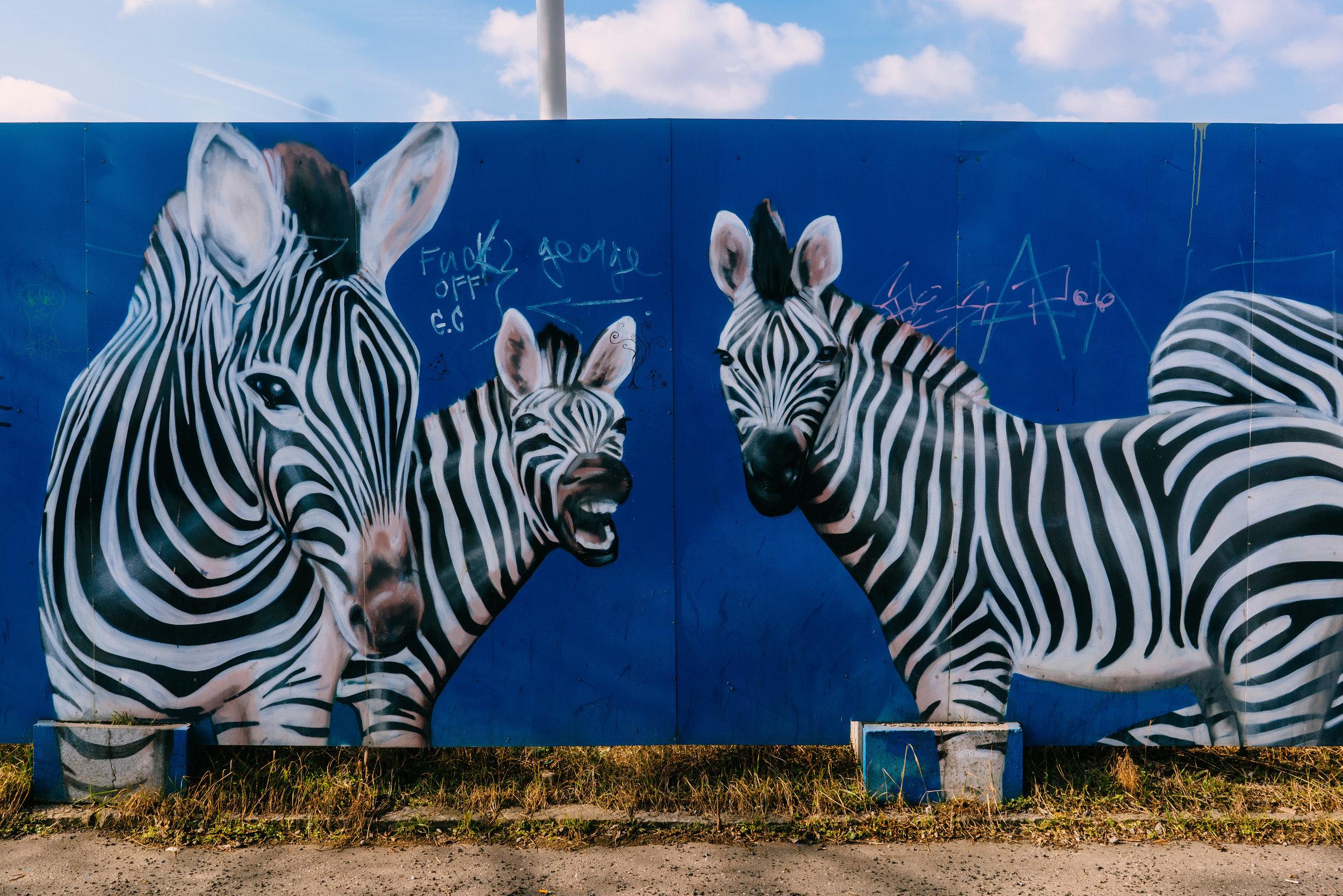 Street art in Prague, zebras