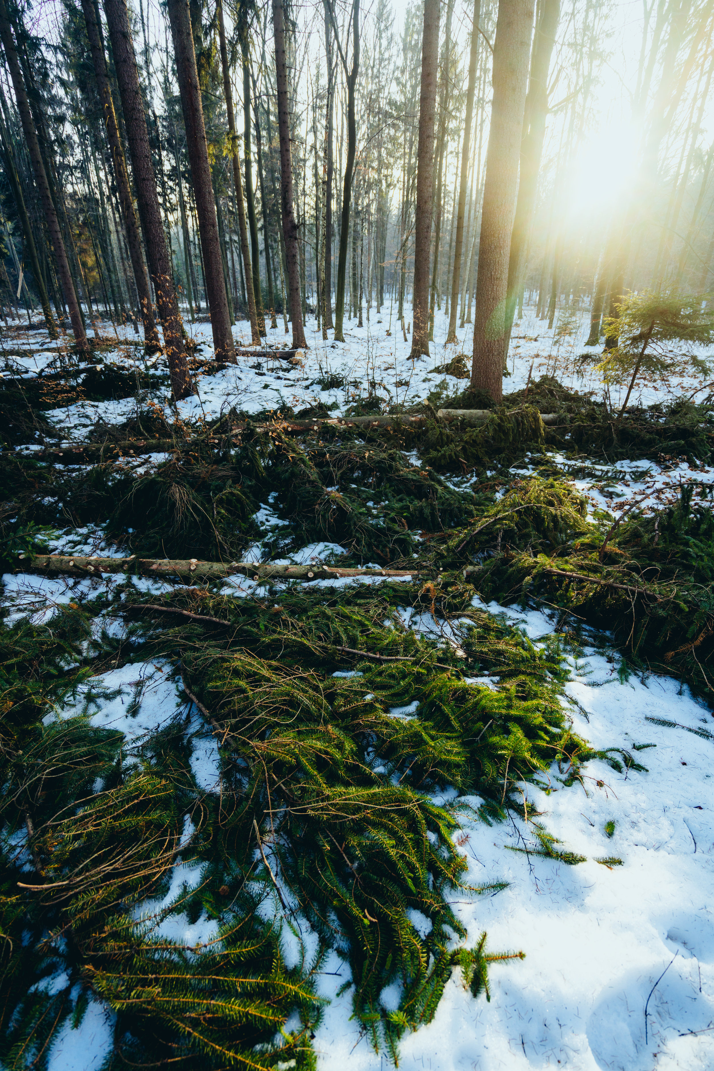 Fallen trees in Saxon Switzerland