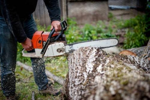 depositphotos_46383873-stock-photo-man-cutting-trees-using-an.jpg