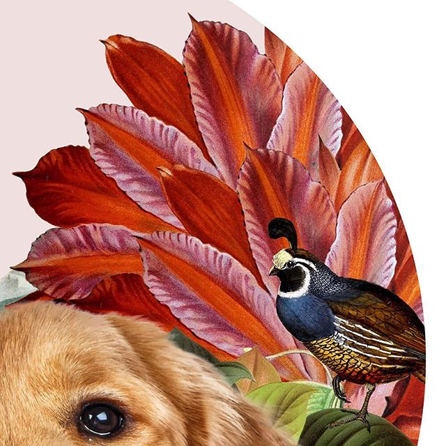 Quail snippet from latest collage. #goldenretriever #petportrait #nadinesage #vavabode #ateliersage #petgifts #doggifts #collageart ##personalizedpet #quail