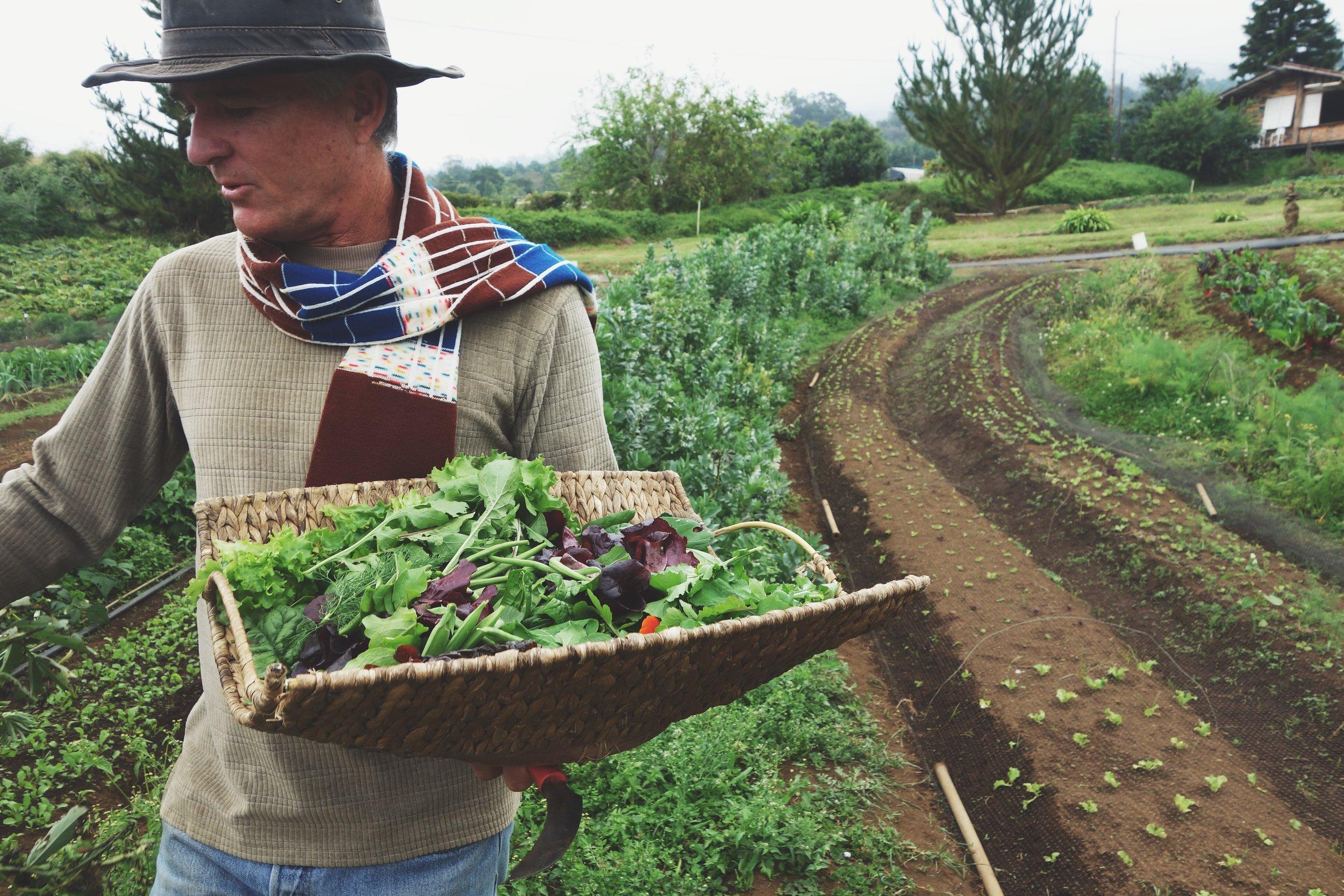 Farm-to-fork experience at O'o Farms || Maui's upcountry || January 2016