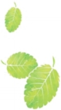 leaves-mint-nutrition