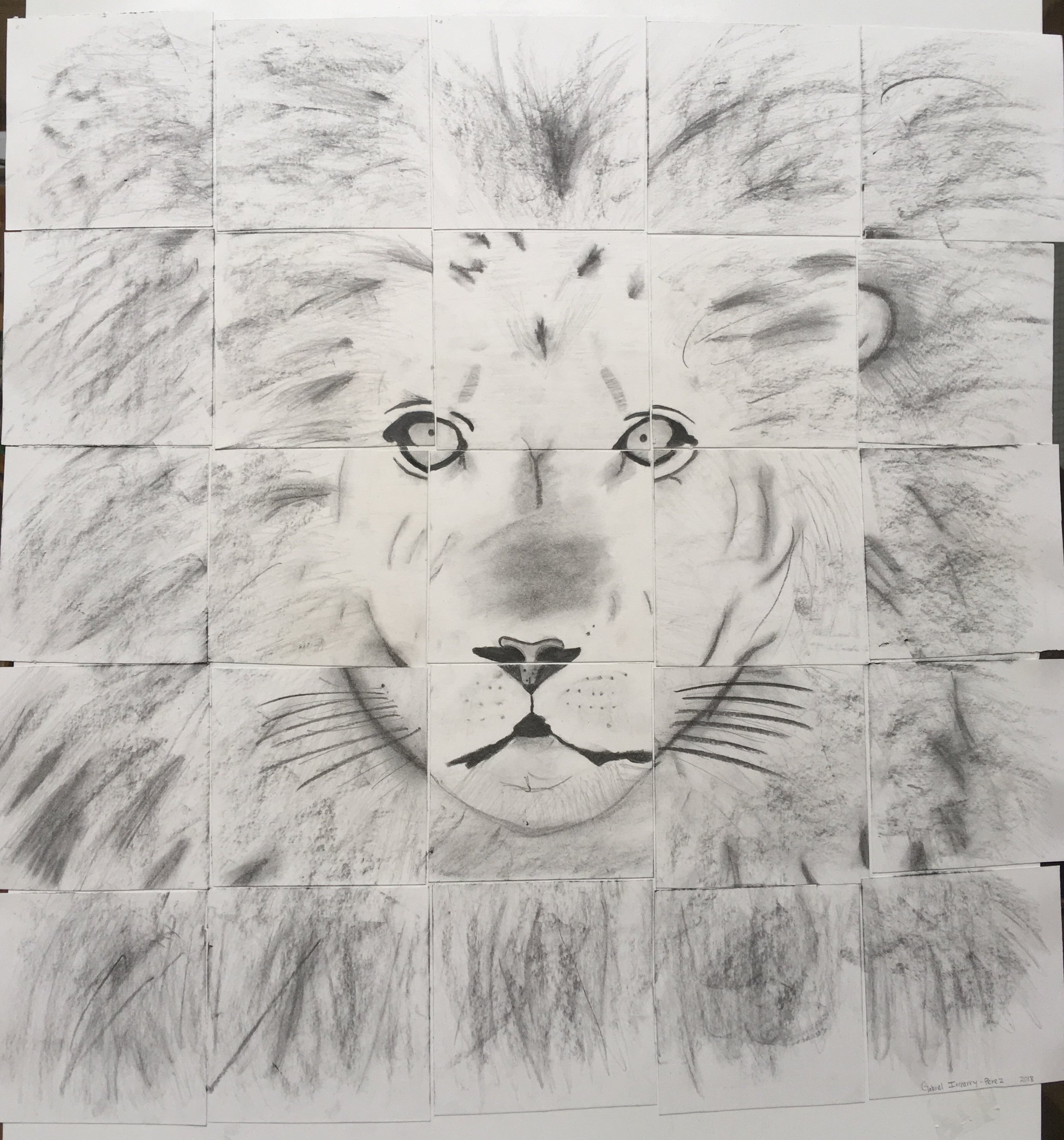 """Lion by Gabriel Irizarry, 25x25"""", Pencil and Charcoal, 2018"""