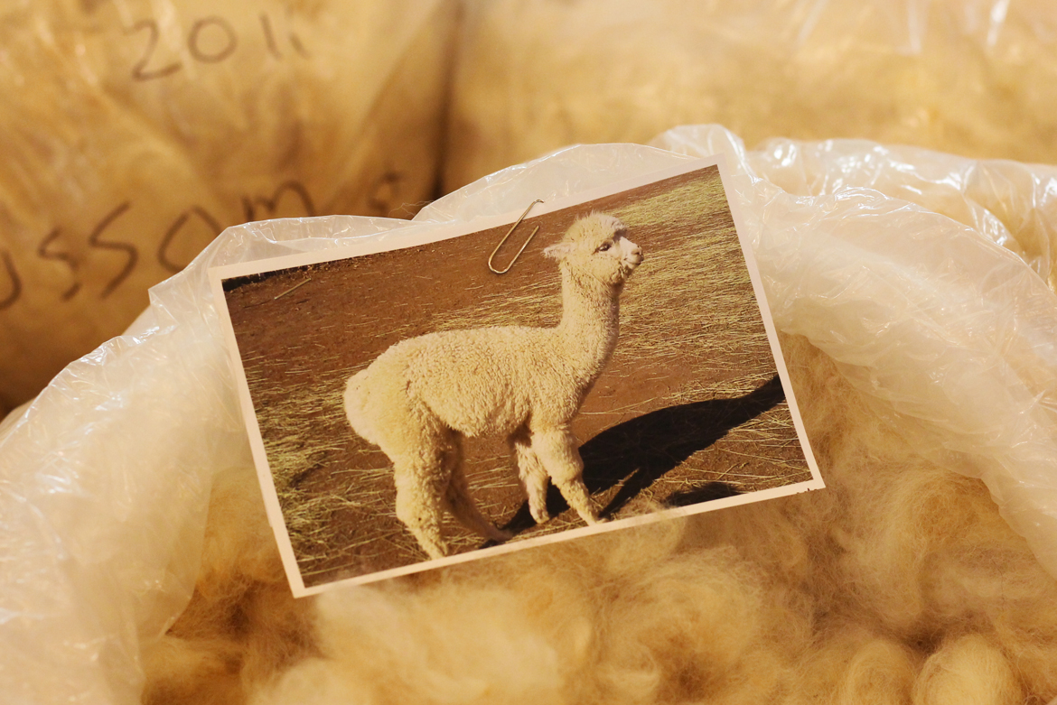 alpaca fleece.jpg