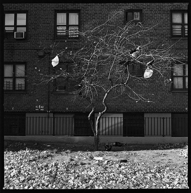 Garbage tree - Brooklyn, NY 2017⠀ ⠀ ⠀ #Hasselblad #kodakprofessional #TriX400 #6x6⠀